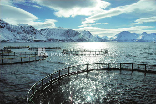 Polyethylene cage fish farming