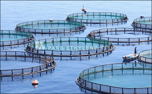 Polyethylene fish farming